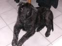 2010-01-18 1851 Kiba
