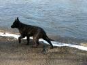 2010-02-15photo015 Kiba